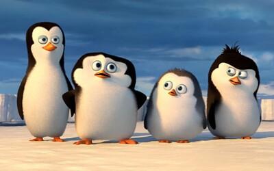 Zvládli zábavné Tučniaky z Madagaskaru samostatný film? (Recenzia)