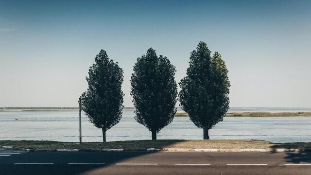 Malý korporátnik vo veľkom svete: Three free trees