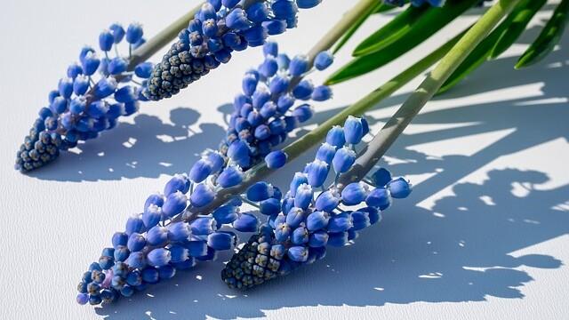 Jaké je dnes pondělí? Modré přece! Úterý bude šedivé, středa škaredá… To jsou Velikonoce!