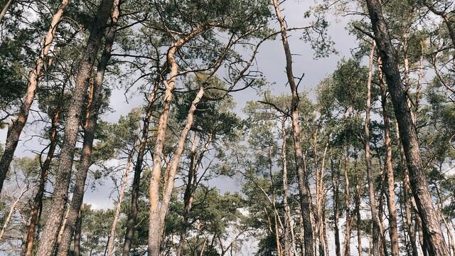Tonya Kol - Keď  kvitnú oleandre