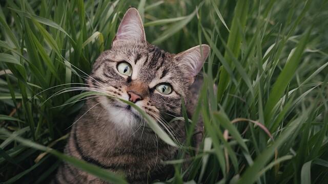 Kočičí tráva aneb Pokojové rostliny (ne)jsou pro kočku