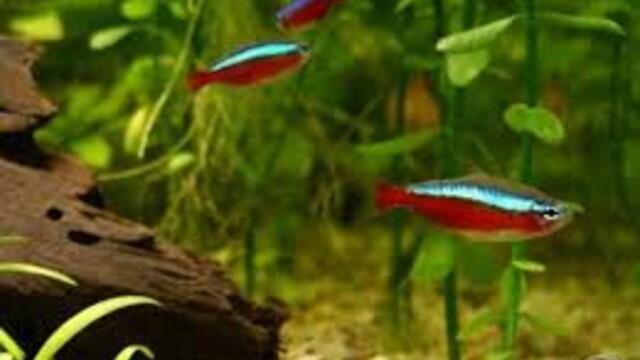 Nepocenujte akvarijní rybičky. Mají osobnost jako my.