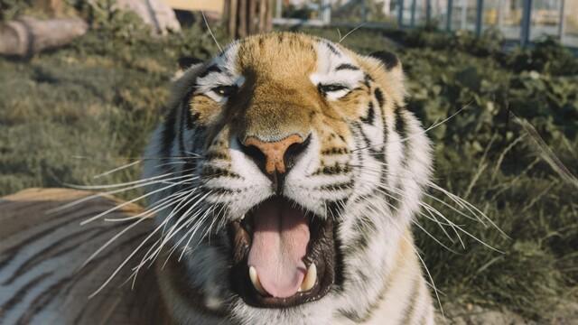 Malkia Park pomáha zvieratám zo zajatia žiť dôstojný život