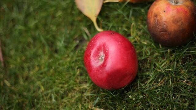 Jablko Belmac – tajná prísada na jablkové pité ako od babky.